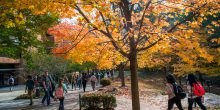 Students walking on the Fairfax Campus in the Fall.  Photo by Evan Cantwell/Creative Services/George Mason University